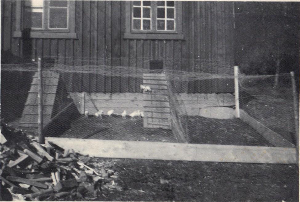 «Kyllinghuset» som ble bygd først på 1940-tallet med rivningmaterialer som ble slept med robåt og fraktet med hest fra sjøen. Jeg var med på den turen og husker den godt, bl.a. fordi det ble fanget en stor torsk med bare kleppen innunder et svaberg. Den drev antagelig og fanget krabber ved berget. Til venstre litt av den store dungen vinterved farfar hogg om sommeren.