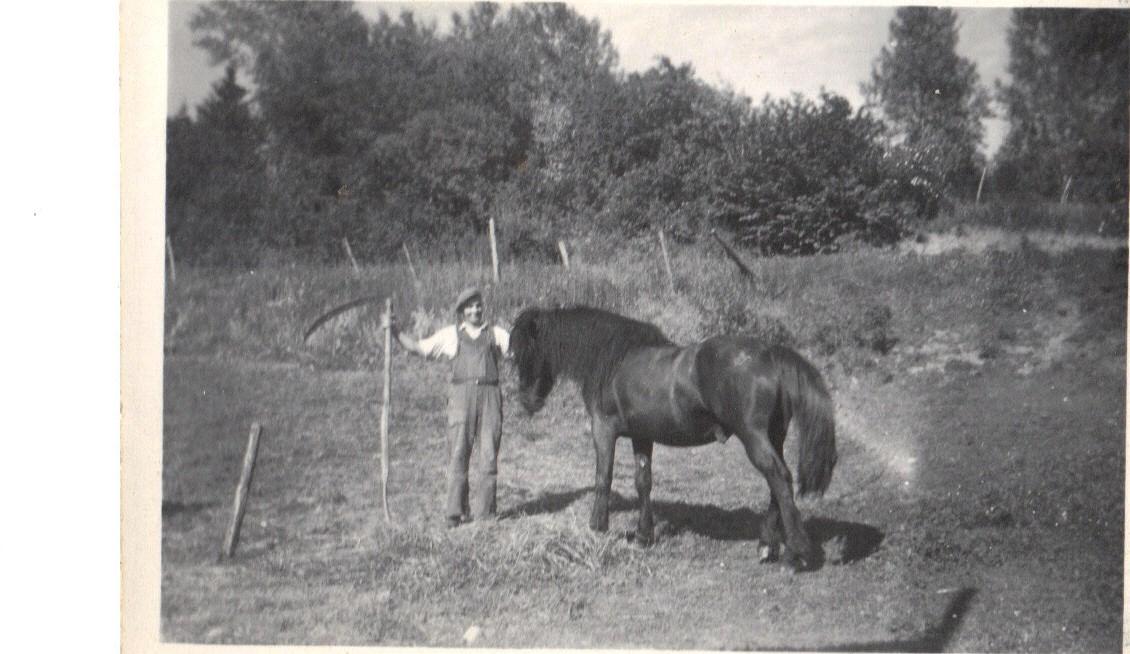 Johannes med Svarten som avløste Blakka, den første hesten på Ulvenaune. Ulvenaune var hesteløst bruk helt til 1940 da Blakka ble kjøpt. Det ble en helt annen hverdag på Ulvenaune da hesten og gårdsredskap ble anskaffet. Det er umulig i dag å forestille seg slitet det var å drive bruket uten hest. Vanskelig også å forestille seg en økonomi så trang at det ikke ga rom for anskaffelse av hest.